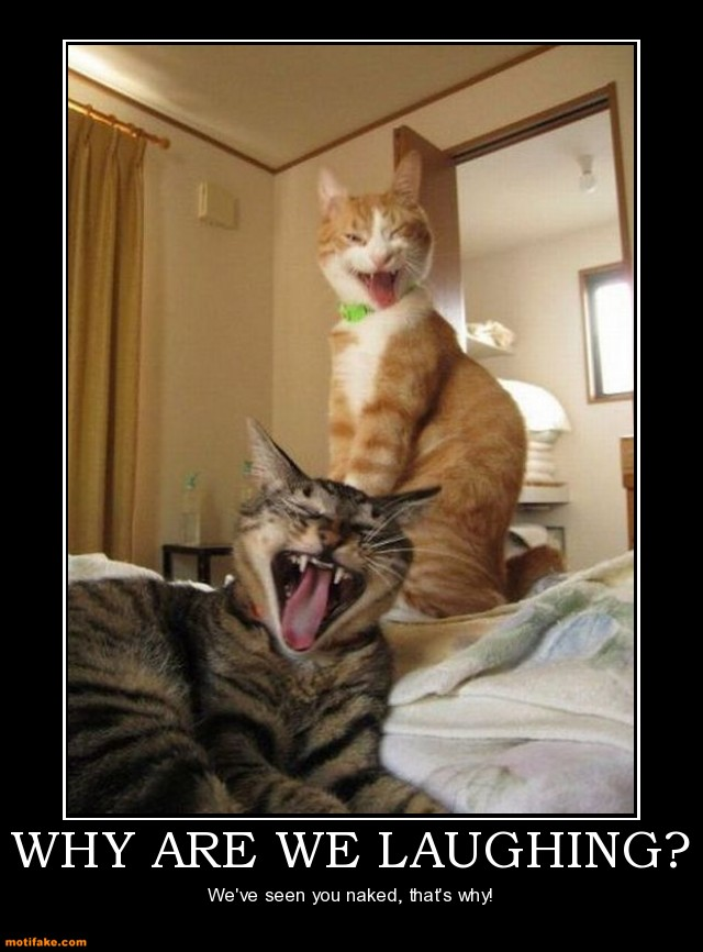 why-are-we-laughing-cats-laughing-funny-weird-bizarre-demotivational-posters-1315160728